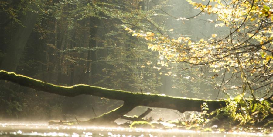 Polska złota jesień na Drawie