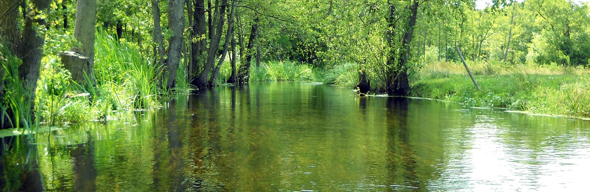 spływy w Puszczy Noteckiej
