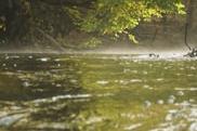 szum wody, szmer opadających liścu